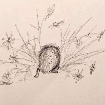 hedgehog in my garden1