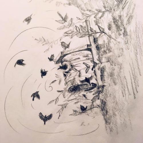 roosting wrens