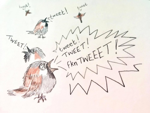 sparrows song