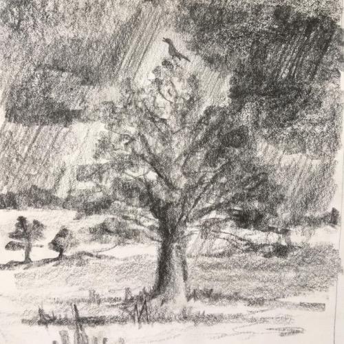 stormcock
